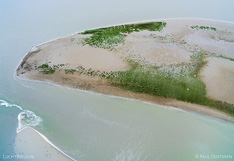 Schor in het Verdronken land van Saeftinghe in Zeeland. Luchtfoto gemaakt met een camera drone door Paul Oostveen.
