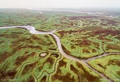 Schorren en geulen in het Verdronken land van Saeftinghe in Zeeland. Luchtfoto gemaakt met een camera drone door Paul Oostveen.