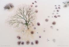 Bomen in het water in ondergelopen uiterwaarden langs de IJssel. Luchtfoto gemaakt met een drone.