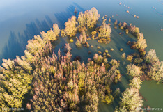 Hoog water in de ondergelopen Millingerwaard langs de Waal. Luchtfoto gemaakt met een camera drone.