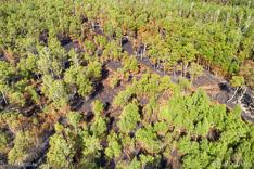 Bos in Deurnese Peel na de grote brand van april 2020 - luchtfoto gemaakt met een drone.