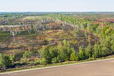 Verbrand bos en veengebied Deurnese Peel na de grote veenbrand van april 2020 - luchtfoto gemaakt met een drone.
