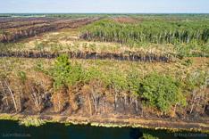 Verbrand bos en veengebied in Deurnese Peel na de grote brand van april 2020 - luchtfoto gemaakt met een drone.