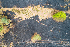 Verbrand heidegebied in de Meinweg na de grote brand van april 2020 - luchtfoto gemaakt met een drone.