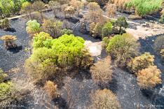 Verbrande bomen en heide in de Meinweg na de grote brand van april 2020 - luchtfoto gemaakt met een drone.