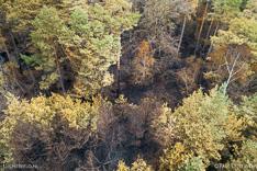 Verbrand bos in de Meinweg na de grote brand van april 2020 - luchtfoto gemaakt met een drone.