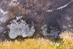 Drooggevallen ven van de Bergvennen tijdens de droge zomer van 2019, gefotografeerd met een camera drone.