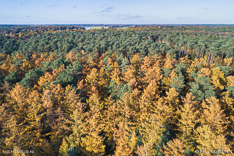 Lariksen in de herfst op Landgoed Junne in het Vechtdal. Luchtfoto gemaakt met een drone.