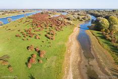 Luchtfoto van meidoorns met bessen in de Duursche Waarden langs de rivier de IJssel, gefotografeerd met een drone.