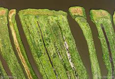 Waterland-P2_001828.jpg
