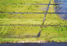 Luchtfoto van Varkensland, een veenweidegebied in Noord-Holland.
