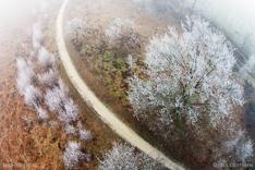 Met rijp bedekte bomen in de winter. Luchtfoto gemaakt met een camera drone (Phantom).